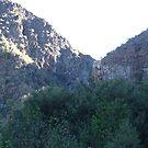 rose valley by kangarookid