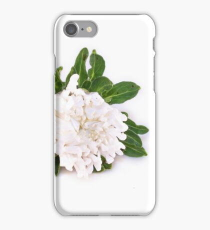 White Callistephus chinensis, chinese aster flower, isolated iPhone Case/Skin
