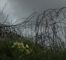 Primroses at Waternish by cuilcreations