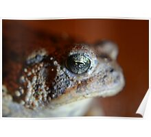 Bufo toad Poster