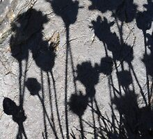 Thrift Shadows on Slate by cuilcreations
