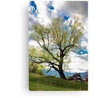 tree on the sky Canvas Print