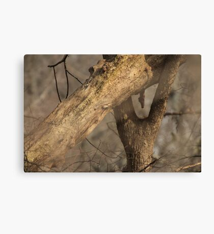 Tree Mating Caught in the Act Canvas Print