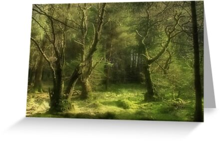 Forest of Dreams by Jamie  Green