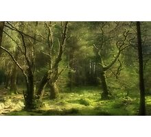 Forest of Dreams Photographic Print