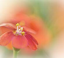 Sweet as Candy... by Bob Daalder