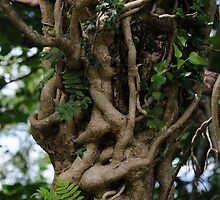 Ivy Smothering a Rowan Tree by cuilcreations
