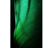 Green Two Photographic Print