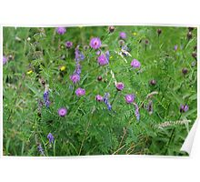 Knapweed and Tufted Vetch Poster