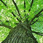 Green Tree by Haz Preena