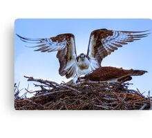 Osprey Rising Canvas Print