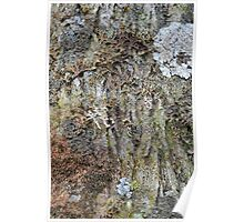 Lichens on an Oak Tree Poster