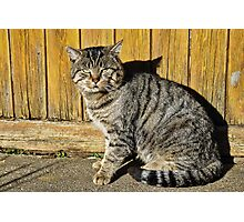 I'm A Mouser Not A Model Photographic Print
