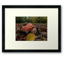 Wild Mushrooms #443TR Framed Print