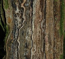 Decaying Ash Tree by cuilcreations