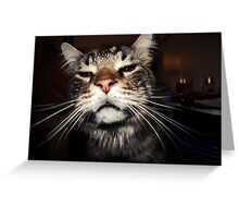 A Curious Cat Greeting Card