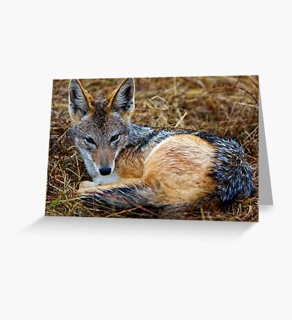I'm Wet, So What ! Greeting Card