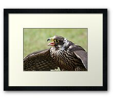 Hawk Quest Framed Print