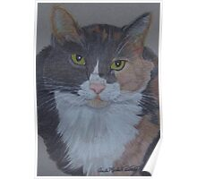 Lizzy-Tortoiseshell Cat Commission Poster