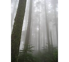 The Spooky Woods Photographic Print