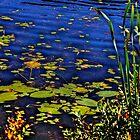 Beaver Dam Pond by Nancy Richard
