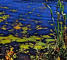 Beaver Dam Pond by Nancy Richard
