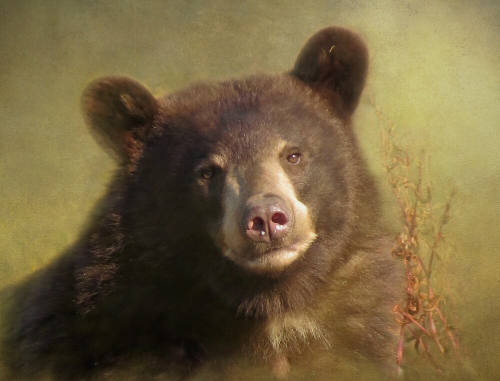 Younger Bear by Alex Call