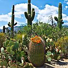 Cacti by Rob Atkinson