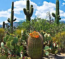 Cacti by Rob Atkinson