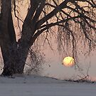 Sunrise Tree by nikongreg