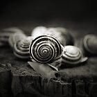 A Snail's World by Trish Mistric