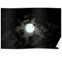 Moonlight branches Poster
