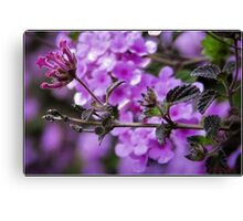 Flower (macro) Canvas Print
