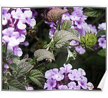 Flower (macro) Poster