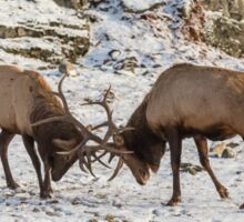 Elk in a fight Sticker