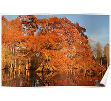 Remarkable tree in remarkable light Poster