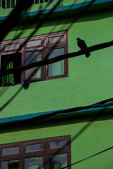 Bird on a Wire by LieselMc