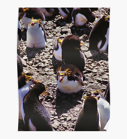 Royal Penguins in the Rookery Poster