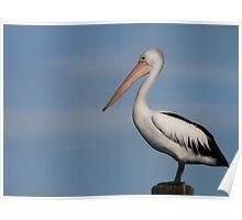 Mr Percival - Redland Bay Qld Australia Poster