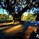 Our Shadows and the Southern Oak by TJ Baccari Photography