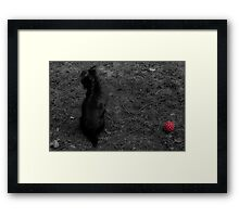 Lonely doggy Framed Print