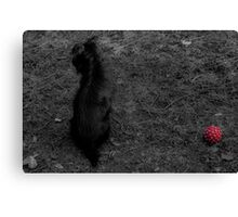 Lonely doggy Canvas Print