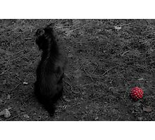 Lonely doggy Photographic Print