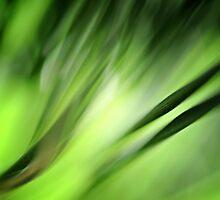 Pine by lumiwa