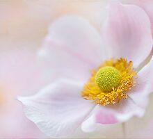 Softly Softly by Jacky Parker