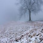 White World by Angelika  Vogel