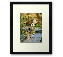 At Water's Edge Framed Print