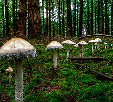 March Of The Fairy Ring by Charles & Patricia   Harkins ~ Picture Oregon