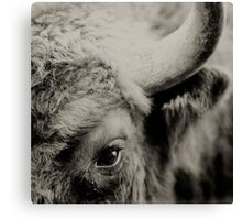 Bisons look Canvas Print