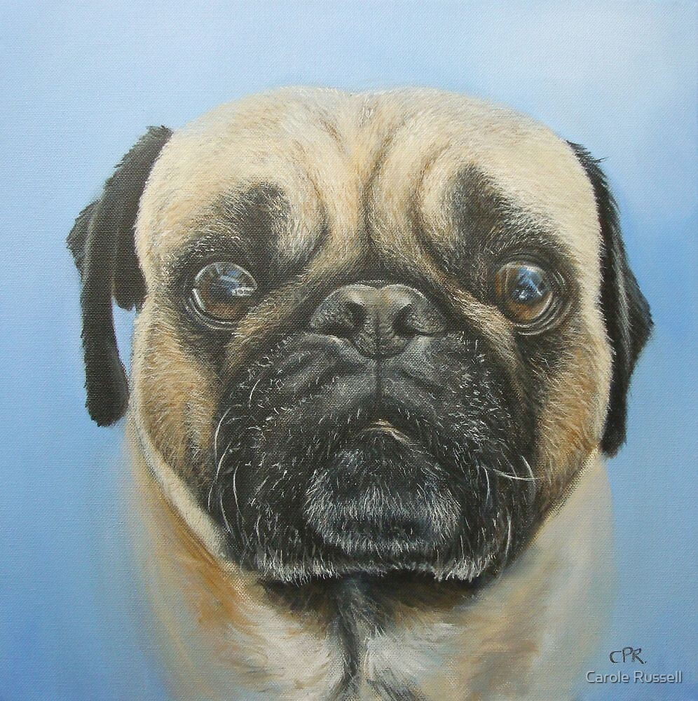 Pug on blue background by Carole Russell